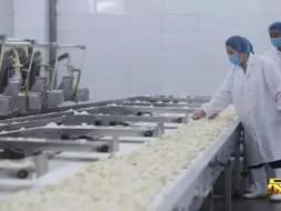 《品质》预告|双阳水饺:寻找妈妈的味道