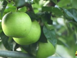 《品质》预告 | 稻田果园里的生态农业经